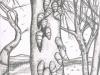 lalbero-delle-conchiglie_224x169_giugno-2014